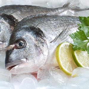 FishSeafood3